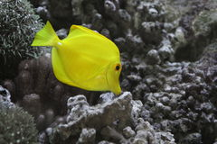 Patte jaune Photographie stock