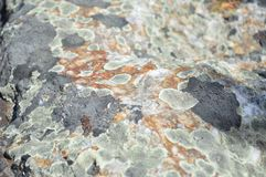 Lichen covered on a rock Royalty Free Stock Photography