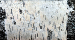 Pattern. Structure of a birch bark a close up Stock Photos