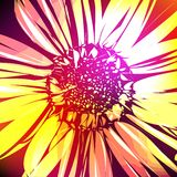 Pattern with abstract flowers daisy. Vector Illustration Stock Photo