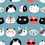 Pattern amusing portraits of cats Stock Photography