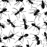 Pattern with ants Stock Photography