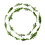 Pattern from arugula in round frame. Pattern from arugula in round circle frame . Circle shape in fresh green ruccola or arugula.  on white with clipping path royalty free stock photos