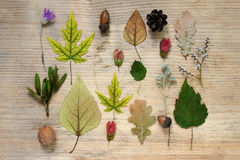 A pattern of autumn finds - yellow maple leaves, oak, dry wild flowers, acorns. Wooden background. Autumn composition. Stock Photo