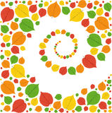 Pattern from autumn leaves Stock Photography