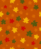 Pattern of autumn leaves Stock Photos