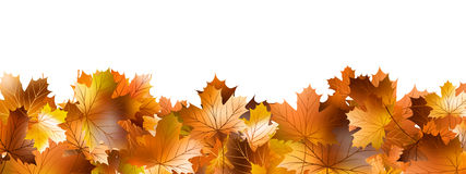 Pattern of autumn leaves. EPS 10 Royalty Free Stock Image