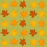 Pattern of autumn leaves Royalty Free Stock Photography