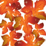 Pattern of autumn leaves Vector Royalty Free Stock Photos