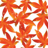 Pattern of autumn leaves Vector Stock Photo