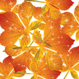 Pattern of autumn leaves Vector Royalty Free Stock Image