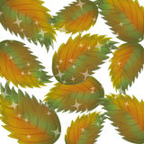 Pattern of autumn leaves Vector Stock Photography