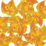 Pattern of autumn leaves Vector Royalty Free Stock Images