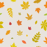 Pattern with autumn leaves. Vector seamless pattern with colorful autumn leaves Stock Images
