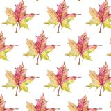 Pattern with autumn maple leaf on white background stock photography