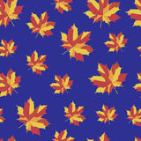 Pattern with b bright maple leaves. Bright maple leaves on blue background. Seamless  pattern. Vector illustration for your design project Stock Photography