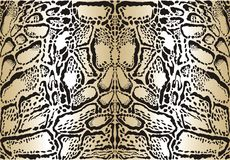 Pattern background clouded leopard Stock Photography