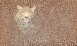 Pattern background leopard Stock Image