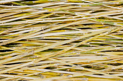 Pattern of bamboo background Royalty Free Stock Photo