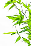 Pattern of bamboo leaf Stock Images