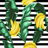 Pattern of bananas and green leaves on a striped background. Tropical background. Stock Photos
