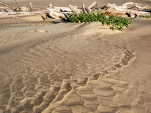 Pattern in beach sand lead to drift wood Stock Images