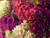 Pattern of Beautiful Bouquet from small florets of different pink shades from above. royalty free stock photography