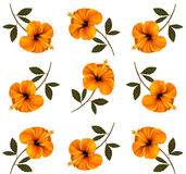Pattern of beautiful yellow flowers. Royalty Free Stock Image