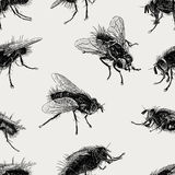 Pattern of the big flies Royalty Free Stock Photography