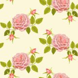 Pattern with big roses. Beautiful seamless floral pattern, flower vector illustration. Elegance wallpaper with big pink roses on floral background Royalty Free Stock Photography