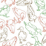 Pattern with birds Royalty Free Stock Photos