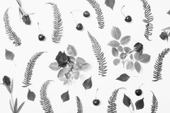 Black and white art monochrome photography. royalty free stock image