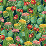 Pattern with blooming cactuses Stock Photo