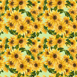 The pattern of blooming yellow flowers sunflower painted in watercolor Stock Photos