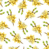 Pattern with blooming yellow twigs Forsythia vector illustration