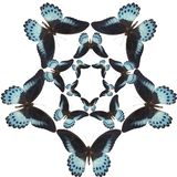 Pattern of blue butterfly stock photography