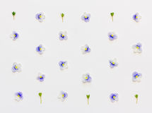 Pattern with blue flower petals and green leaves on a white background Stock Photo
