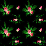Pattern from bouquets of roses. Stock Photos