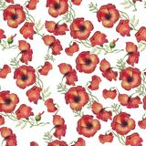 Seamless pattern red poppies watercolor. Pattern of bright poppies for textile design, drawing for printing, packaging, printing Royalty Free Stock Photos