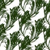 Pattern of the bunches of decorative plant Royalty Free Stock Photos