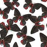Pattern with butterflies. Hand drawn watercolor seamless pattern with colorful tropical butterflies Royalty Free Illustration