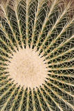 Pattern of cactus Royalty Free Stock Photo