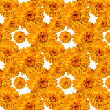 Pattern calendula marigolds bloomed Royalty Free Stock Photos