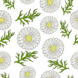 Pattern with camomile and leaves hand drawing. Stock Photos