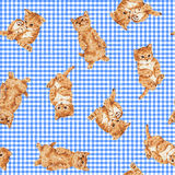 Pattern of cat Stock Photography