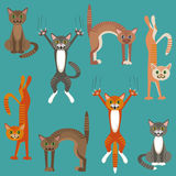 Pattern with cats playing Stock Images