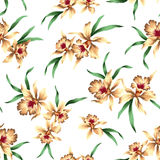 Pattern of Cattleya Stock Image