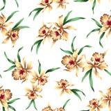 Pattern of Cattleya Stock Image
