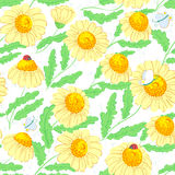 Pattern with chamomile Royalty Free Stock Photography