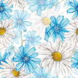 Pattern of chicory and chamomile Stock Image